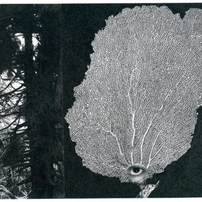 https://pazdabutler.com/upload/exhibitions/_-title/Dana_Harper_Hiram_Butler_2017_7.jpeg