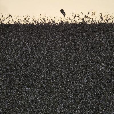 https://pazdabutler.com/upload/exhibitions/_-title/Serra_-_Backstop_I_%28detail_image%29_lo-res.jpg